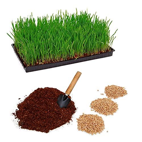 Pfotenolymp® Set per piante con ciotola in plastica – Ciotola per gatti per gatti – Set di piante pronto con semi e terriccio – DIY – Terriccio di cocco