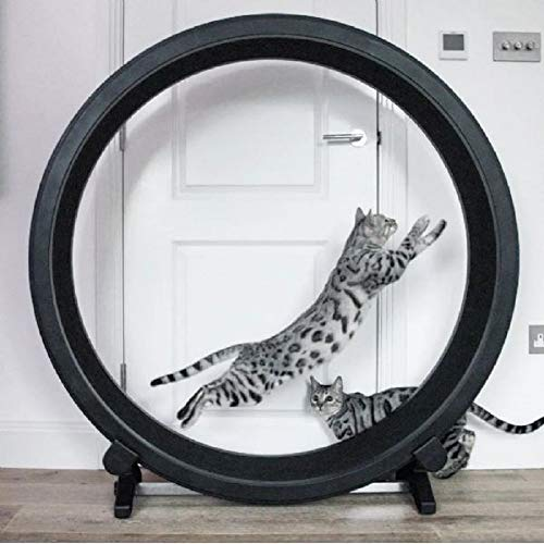 Paylesswithss Roue d'exercice pour Chat
