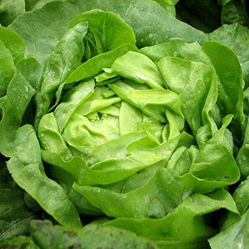 200pcs / lot italiens Graines de laitue Good Taste Great Salad Choix, facile à cultiver légumes Bonsai Diy Maison & Jardin