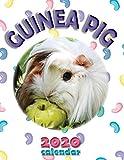 Guinea Pig 2020 Calendar