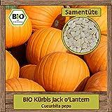 BIO Kürbis Samen Sorte Jack o'Lantern (Cucurbita pepo) Gemüsesamen Kürbis Saatgut