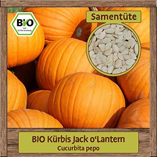 BIO Kürbis Samen Sorte Jack o\'Lantern (Cucurbita pepo) Gemüsesamen Kürbis Saatgut