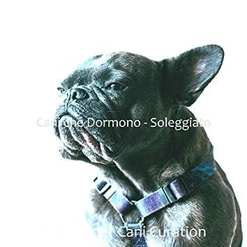 Cani che Dormono - Soleggiato
