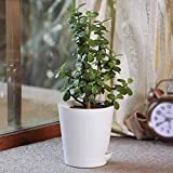Better Homes And Gardens Indoor Plants
