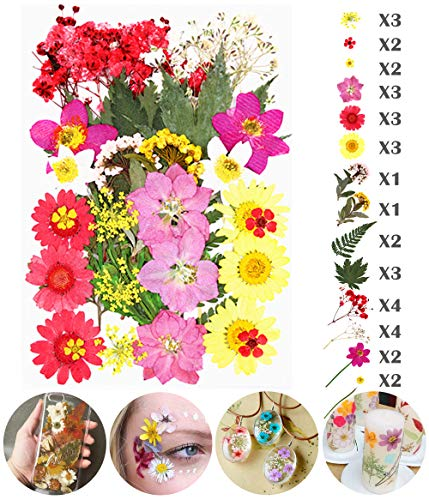 Longwu Real Dried Pressed Flowers Assorted Colorful Daisies Leaves Hydrangeas for DIY Candle Resin Jewelry Nail Pendant Crafts Making Art Floral Decors