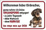 AdriLeo Schild - Vorsicht Dackel Einbrecher Rauhaardackel Teckel Dachshund Hund Warnschild Achtung Türschild (20 x 30cm)