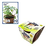Grow Your Own Catnip - All-in-One Catnip Growing Kit, Complete Kit...