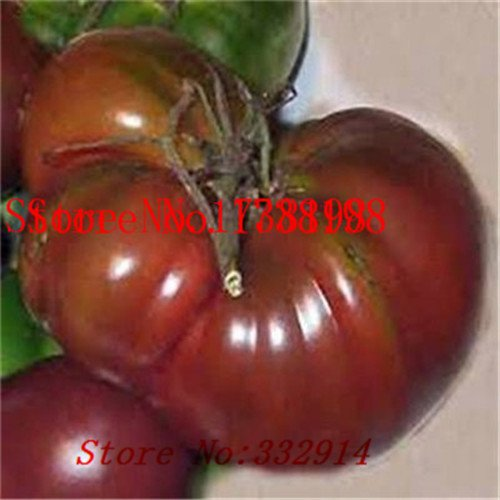 Vente! 100 GRAINES RED bumble bee TOMATE! TRÈS RARE! Bon savoureux! Vegetable Seed