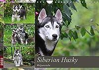 Siberian Husky - Welpenstube (Wandkalender 2022 DIN A4 quer): Siberian Husky mit Welpen spielend im Garten (Monatskalender, 14 Seiten )