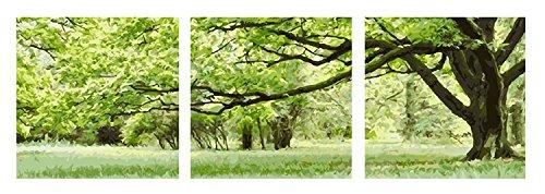 YXQSED Paquete de 3 Madera enmarcada Pintura al óleo de DIY por Números, Pintura por Número de Kits- Arboles Verdes Hacer Sombra 20*20 Inch