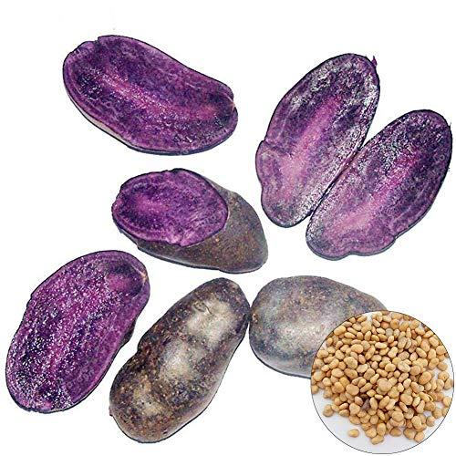 Beautijiam Fleischkartoffel Samen Schwarz