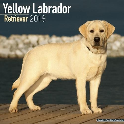 Yellow Lab Calendar - Yellow Labrador Calendar - Dog Breed Calendars 2018 - Dog Calendar - Calendars 2017 - 2018 wall calendars - 16 Month Wall Calendar by Avonside