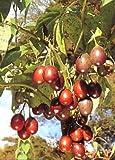 100 semi per porzione Cresce in ambienti chiusi è possibile durante tutto l'anno. Quattro semi di colore carta in formato cartolina con illustrazione di colore Con istruzioni per la coltivazione e la cura estese.