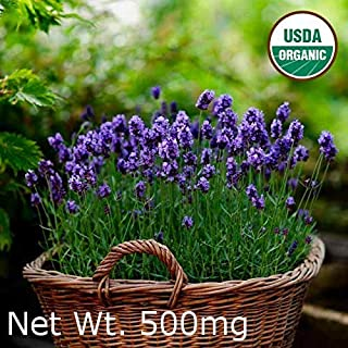 Gaea's Blessing Seeds - English Lavender Seeds 500+ Non-GMO Seeds Organic Purple Open-Pollinated Heirloom Vera