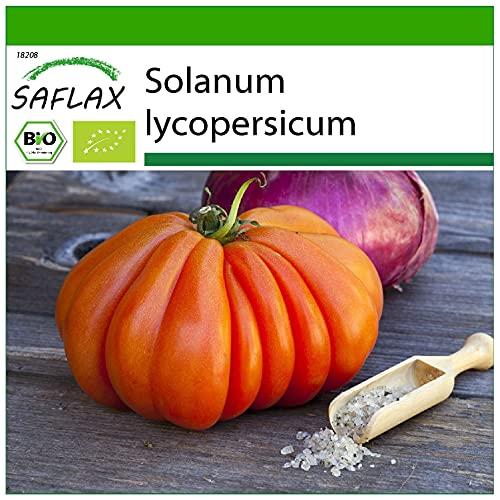 SAFLAX - Ecológico - Tomate - Corazón de buey - 10 semillas - Con sustrato estéril para cultivo - Solanum lycopersicum