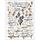 Poster - Sharks, Skates, Rays & Chimaeras of The Pacific