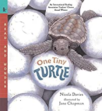 Best one tiny turtle Reviews