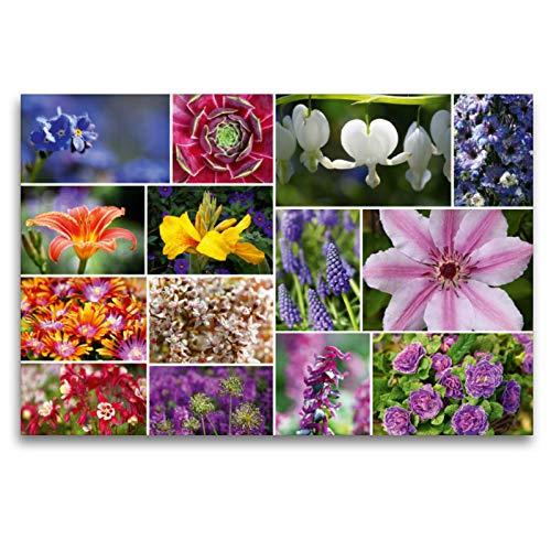 Premium Textil-Leinwand 120 x 80 cm Quer-Format Staudenblumen Collage | Wandbild, HD-Bild auf Keilrahmen, Fertigbild auf hochwertigem Vlies, Leinwanddruck von Martina Cross