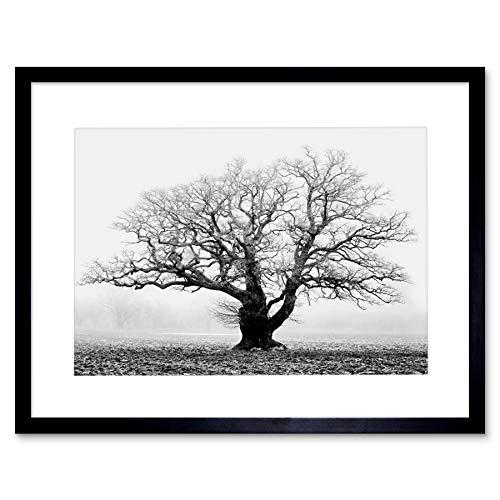 Old Oak Tree Black White Mist Fog Photo Framed Art Print Picture & Mount F12X634