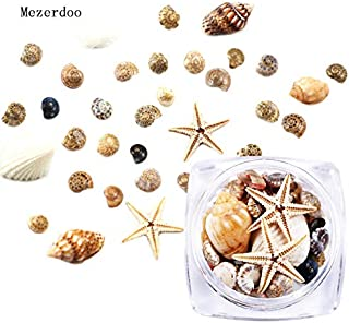 Nail Art Accessories - 1 Box 3D Natural Nail Decoration Mini Conch Shells Starfish Sea Beach Ornaments Manicure Tools for DIY, Nail Art DIY Decor, Phone Case DIY, Crystal Nail Rhinestone