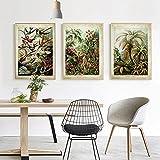 Pinturas sobre lienzo Plantas de la selva tropical Aves Imágenes Arte de la pared Carteles e impresiones Sala de estar Dormitorio Decoración del hogar 23.6 'x35.4' (60x90cm) Sin marco