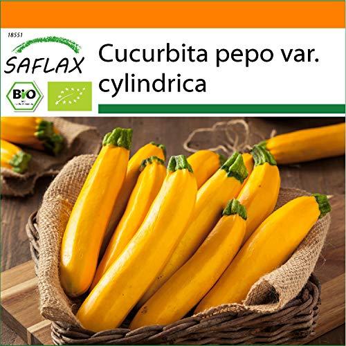 SAFLAX - Ecológico - Calabacín - Fiebre del Oro - 5 semillas - Cucurbita pepo