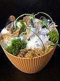 Regalo con Flores, arreglo de Flores Frescas y Naturales Mujer, día de la Madre, Regalo Personalizado,, Incluye Luces y Tarjeta Personalizada