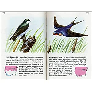 Birds: A Fully Illustrated, Authoritative and Easy-to-Use Guide (A Golden Guide from St. Martin's Press)