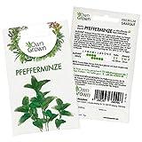 Premium Pfefferminze Samen (Mentha piperita), Pfefferminzesamen zum Anbau im Garten und auf dem Balkon, mehrjährig, Kräuter Saatgut für rund 400 Pfefferminze Pflanzen von OwnGrown