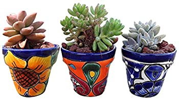Best mexican planters Reviews
