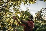 Fiskars Bypass-Gartenschere M, Solid, P321, Für frische Äste und Zweige, Antihaftbeschichtet, Edelstahl-Klingen, Länge: 20,1 cm, Schwarz/Orange, 1057162 - 4