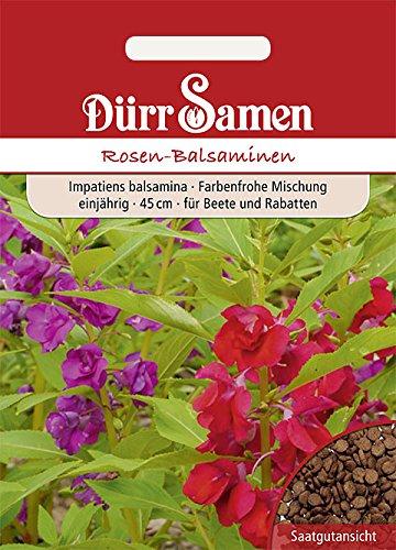 Dürr-Samen - 50 x Rosen Balsaminen...