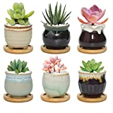 T4U 6CM Macetas para Cactus de Cerámica con Plato de Bambú Paquete de 6, Mini Maceteros Pequeños para Suculento Plantas Casa y Jardin Boda Decorativos Interior