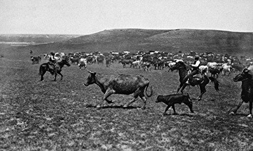 Posterazzi Wyoming Cowboys C1890 NCutting Out Cowboys Driving Cattle In Wyoming, Fotografiert von Charles D Kirkland C1890, Kunstdruck, 18 x 24 cm
