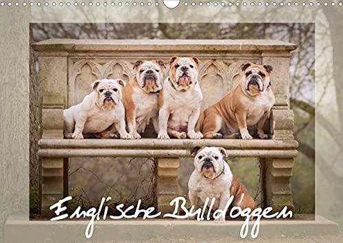 Englische Bulldoggen (Wandkalender 2022 DIN A3 quer)