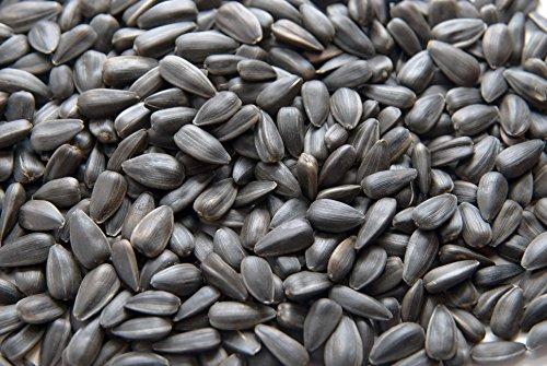 Samore Sonnenblumenkerne schwarz 25 kg erstklassige Qualität Wildvogelfutter