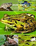 2020 -2021 18 Month Weekly and Monthly Planner July 2020 to December 2021: Frog Collage - Monthly Calendar with U.S./UK/ ... Reptiles & Amphibian Animal Nature Wildlife