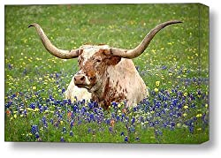 Longhorn cow in gallery wrap art
