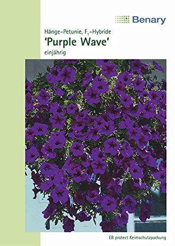 Petunie Hänge Petunie Wonder Wave Purple 100 cm Samen