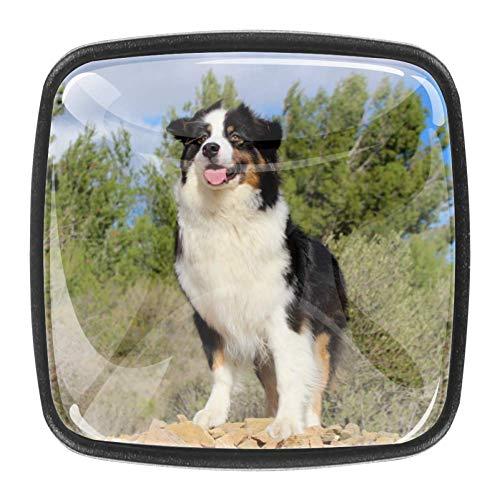 Berner Sennenhund Schublade Knopf Türgriff 4PCS mit Schrauben für zu Hause