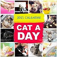 Cat-A-Dayカレンダー2021バンドル – デラックス2021キャッツデイリーウォールカレンダー 100枚以上のカレンダーステッカー付き 猫愛好家ギフト オフィス用品
