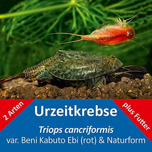 AQ4Aquaristik Triops cancriformis - naturfarben und rot - 2 x Triops Eier - mit Futter und Anleitung