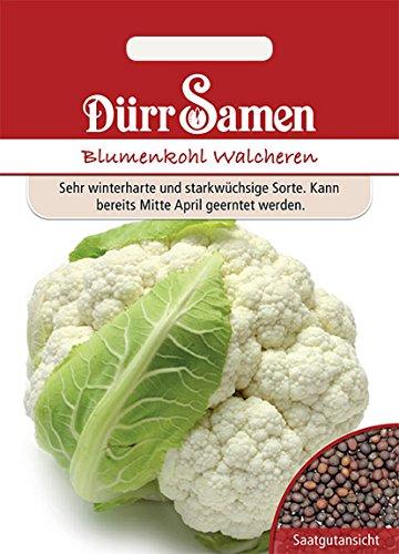 Blumenkohl, winterhart, Walcheren, Brassica oleracea, Samen, Saatgut