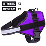 Harnais pour chien respirant sans traction réglable, Coffre d'aide à l'entraînement à la marche, Contrôle facile en extérieur pour les petits chiens de taille moyenne, Harnais pour chien violet