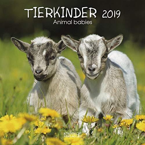 Tierkinder (BK) 226919 2019: Broschürenkalender mit Ferienterminen. Babys von Tieren in süßen Bildern. 30 x 30 cm