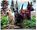 Pintura Al Óleo Puppy By The River Animal 5D Pintura De Diamante Punto De Cruz Taladro Completo...