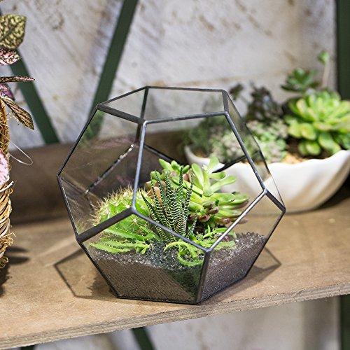 Transparentes fünfeckiges Dodekaeder Glas, Terrarium, auch für Sukkulenten , farblos, Schwarz - 3