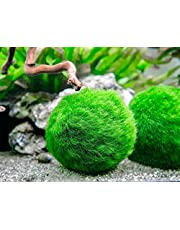 Marimos Ball Variety Pack - Size 3CM Premium Marimo - The World's Simplest Living Aquarium Plant - Moss Balls Green Algae Aquatic Plant Aquarium Fish Shrimp Tank Ornament Decoration
