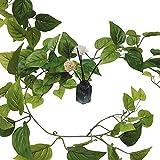 seOSTO Plant Artificial Simulation Pendant Plant 4 Vines, Fake Ivy for Wall Home Porch Garden Wedding Wreath Decoration (no Basket)