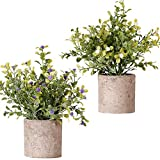 FagusHome Plantas Artificiales en Macetas 2 Piezas Mini Plantas de Eucalipto Rosemary Plants Artificiales en Macetas...